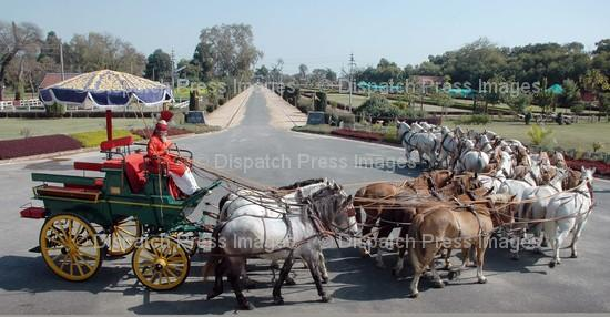 28 Horse Drawn Carriage | Pakistan Flood - Week of August 30