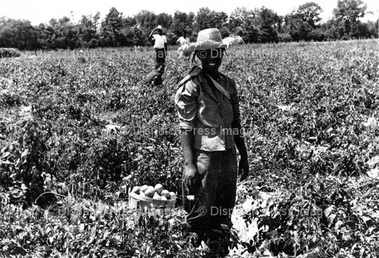 Migrant Field Workers