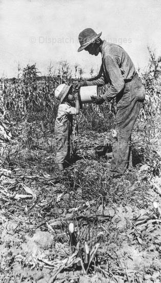The Sugar Plantation
