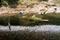 Gathering River Grass