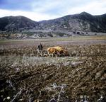 Algerian Farmer