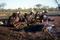 Aborigine Gathering