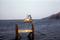 Shrimp Boat - \