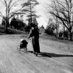 Lady Pushing a Baby Stroller