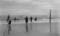 Coney Island: Rope Bathing