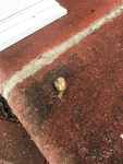 Invasion of the Snails