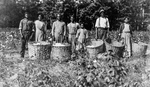 Cotton Pickers: Alabama