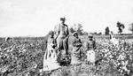 Cotton Pickers - Child Labor