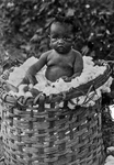 Baby in a Basket of Cotton