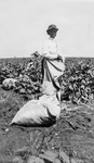 Young Woman in the Cotton Fields