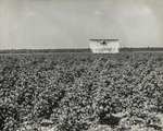 Crop Duster in the Cotton Fields